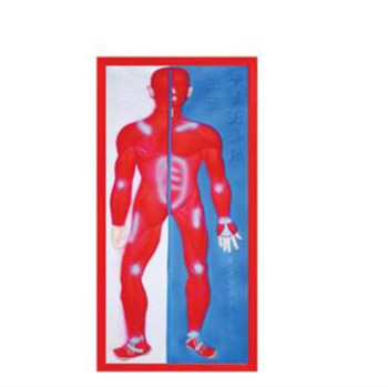 Relief Model of Muscular System LM1160-2 for Teaching Educational Use