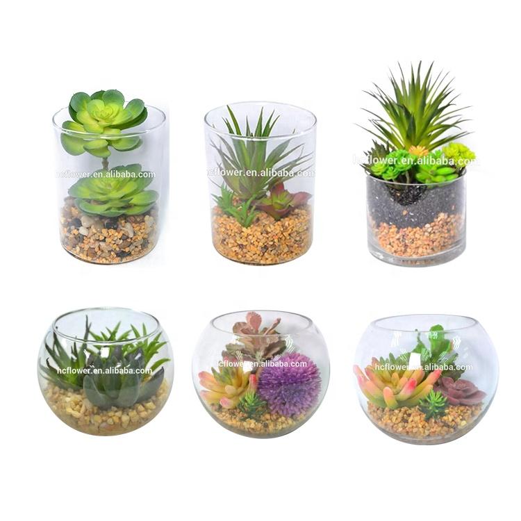 Factory Price Indoor Tabletop Decoration Mini Glass Artificial Succulent Bonsai Plants Buy Bonsai Plants Succulent Plants Artificial Succulent Product On Alibaba Com