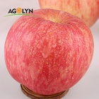 Bulk Apple Fruits Fresh Style Organic Red Qinguan Apple