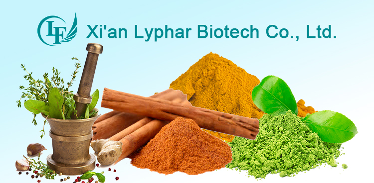Natural Forsythia Suspensa Extract Phillyrin Powder