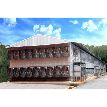 Large Span For 10000 Chicken Poultry House Prefabricated Steel Structure