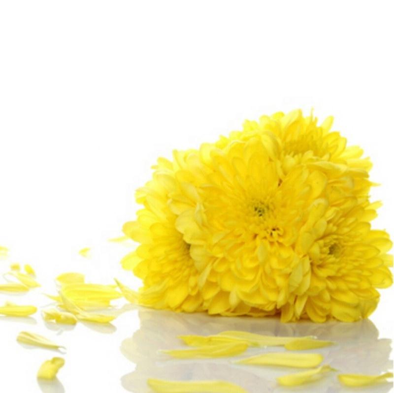 Top Sale Pure Natural Organic Flower Tea Dried Yellow Chrysanthemum Tea - 4uTea | 4uTea.com