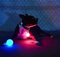 Pet light training ball lost light ball