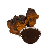 Chaga plant thick consistency natural plant extracts