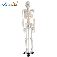 85cm Adult Human Skeleton Model Medical Science Human Anatomical Model