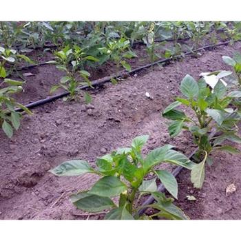Agricultural Polytunnel Nursery