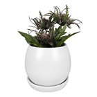 Custom Indoor Decorative Cactus Succulent Planter Ceramic Flower Pots with Tray