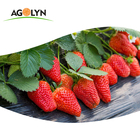 Strawberries Dried Strawberry AGOLYN Dried Fruit Bulk Organic Freeze-Dried Fruit Strawberries
