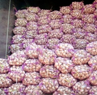 Chinese natural normal white fresh garlic for sale