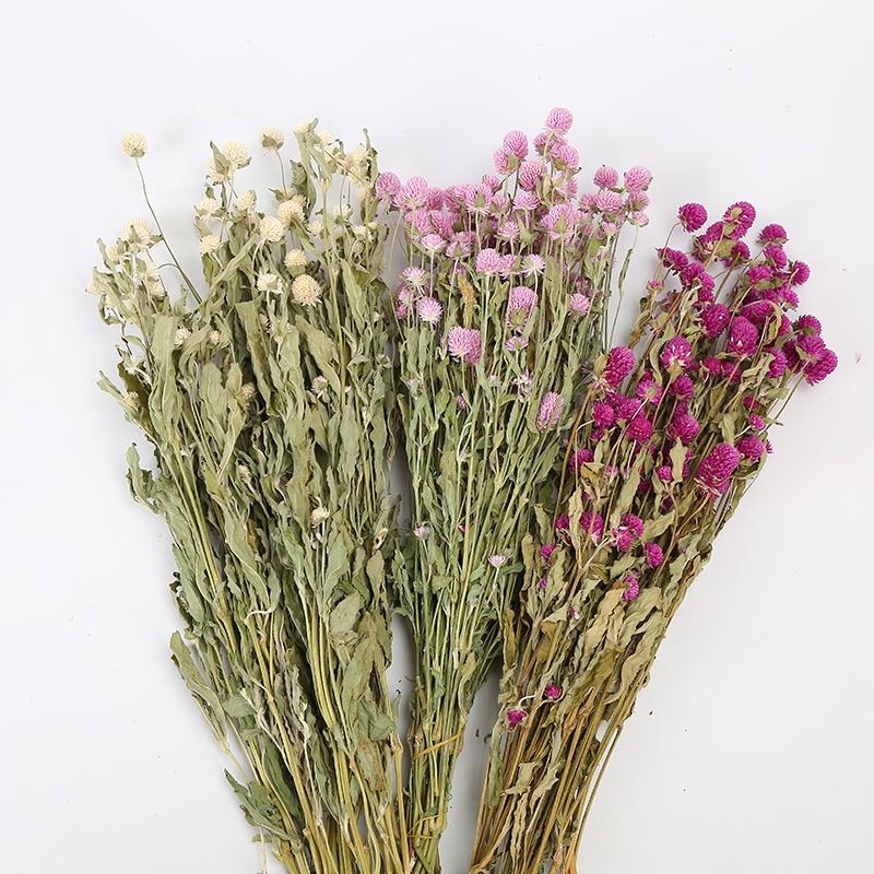 วันวาเลนไทน์ Christmas Decor Globe Amaranth จัดดอกไม้แห้งดอกไม้ที่กินได้