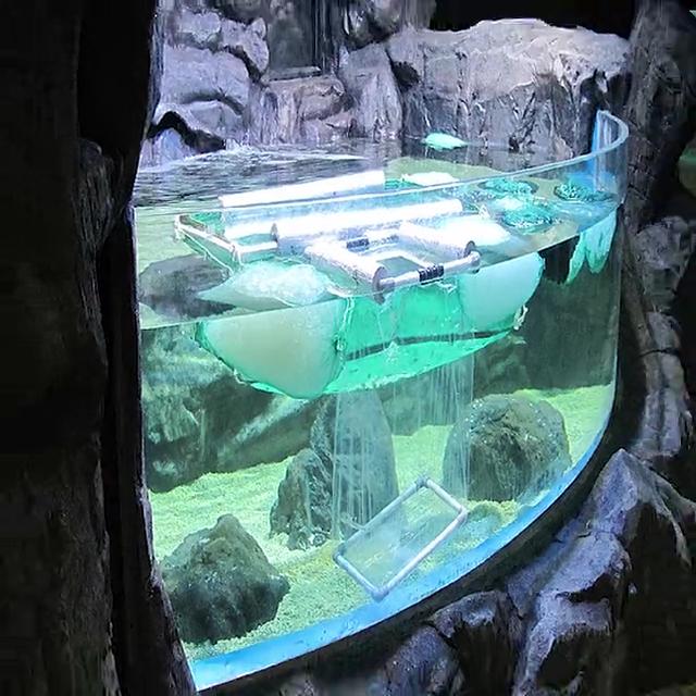 ใสอะคริลิขนาดใหญ่พิพิธภัณฑ์สัตว์น้ำปลาถังเพื่อขาย
