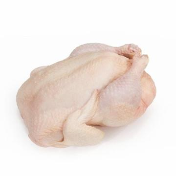 Poultry Shrink Bags- 50 Clear 10&quot;x16&quot; <strong>Chickens</strong> and iced fresh <strong>chicken</strong> heat shrinking bag