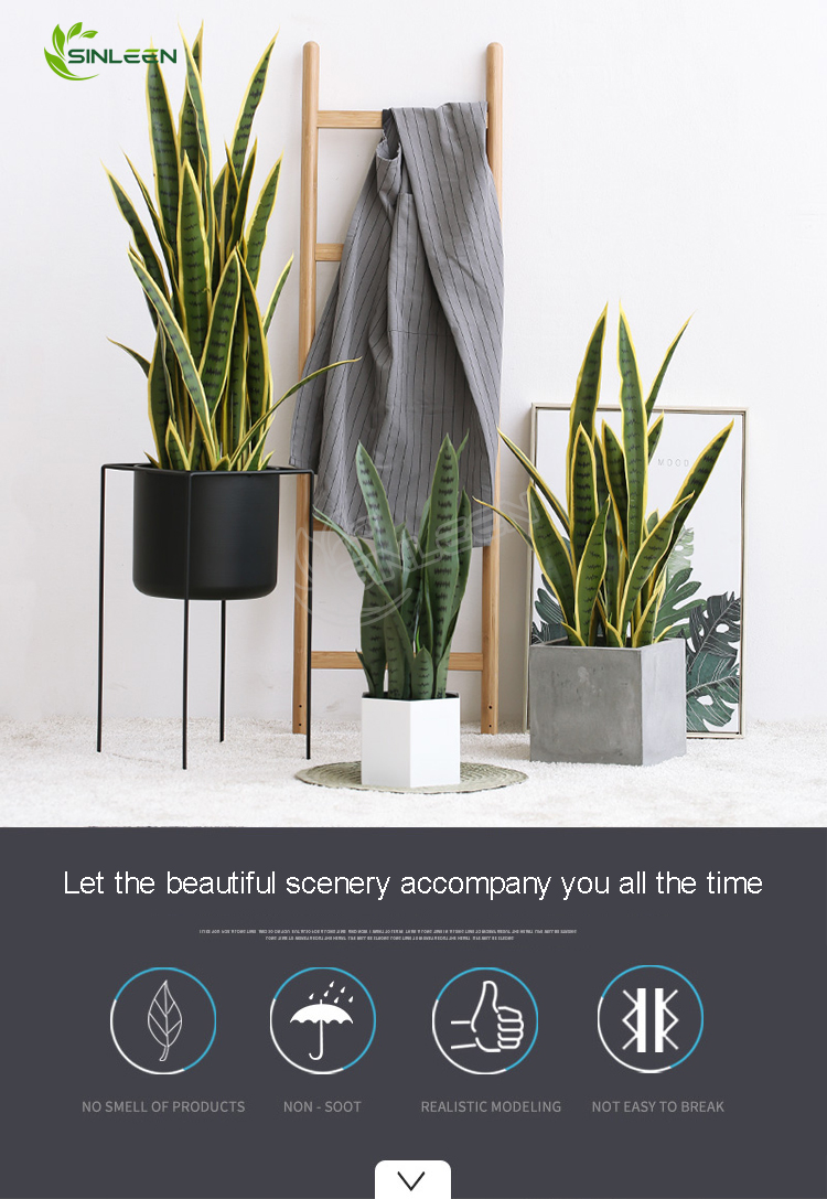 Artificial With Pot Mini Sansevieria Bonsai Snake Plant For Indoor Decor Buy Artificial With Pot Mini Sansevieria Bonsai Snake Plant For Indoor Decor Mini Sansevieria Bonsai Sansevieria Trifasciata Laurentii Product On Alibaba Com