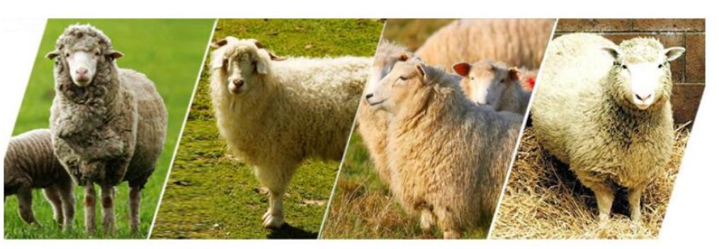 2019 Great-Farm electric sheep clipper/sheep clipper 250W-500w on sale