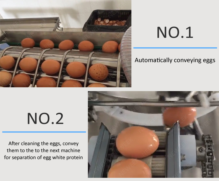 NEWEEK egg yolk white liquid divider line white yolk egg separating machine price