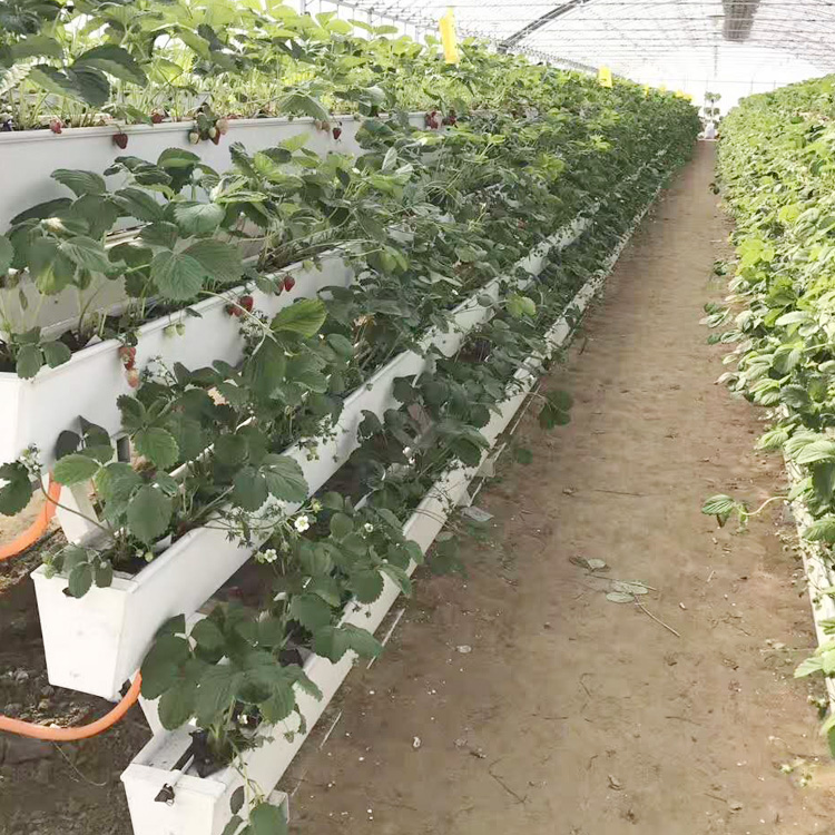 NFT Planting Hydroponic strawberry gutter Growing System for Agriculture Irrigation (single whole)