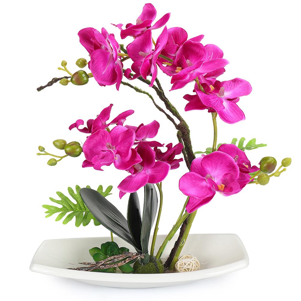 Купить орхидеи цветы оптом в харькове