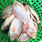 Block Tilapia High Quality 2019 Most Popular Frozen Red Tilapia For Human Consumption