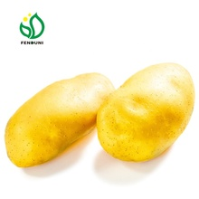 2019 NEW farm peeled fresh sweet potato/patates