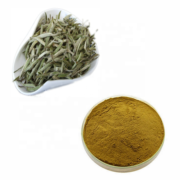 Organic Silver Needle White Tea with Favorable Price - 4uTea | 4uTea.com