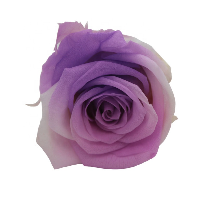 Yunnan Kunming Flower Factory Preserved Roses Wholesale at Cheap Price
