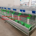 Hot Dip Galvanized Steel Material Automatic Rabbit Farming Battery Cage/Industrial Rabbit Breeding Cages/Commercial Rabbit Cages