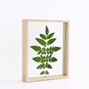 Creative three-dimensional diy dried flower leaves plant specimen box box double-sided transparent acrylic photo frame set table