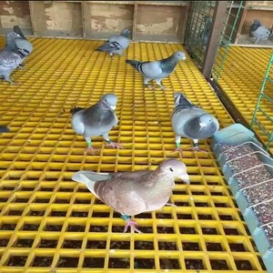 Plastic Floor Mat For Pigeon Loft