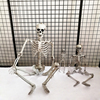 Wholesale fashionable china trendy three kinds of size halloween skeleton