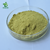 Hot sale pure maringa leaved  powder  in bulk price  for healthcare food