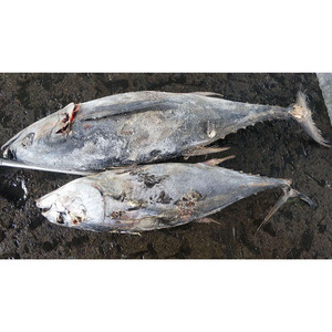 frozen seafood canned fish seafood fish buyers new product market yellow  fin tuna