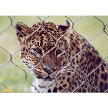 Stainless Steel 304/316 Animal Enclosure Mesh Corrosion Resistant for Lion Tiger Cages