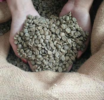 Raw Coffee Bean Origin Green Coffee Bean Roasted Coffee Factory