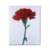 Modern digital printing picture customization oil painting Flower Printing Canvas,Simple Flower Paintings