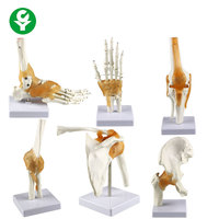 HOT Joint Series model Human Shoulder Elbow Hip Knee Hand Foot Joint Bone models
