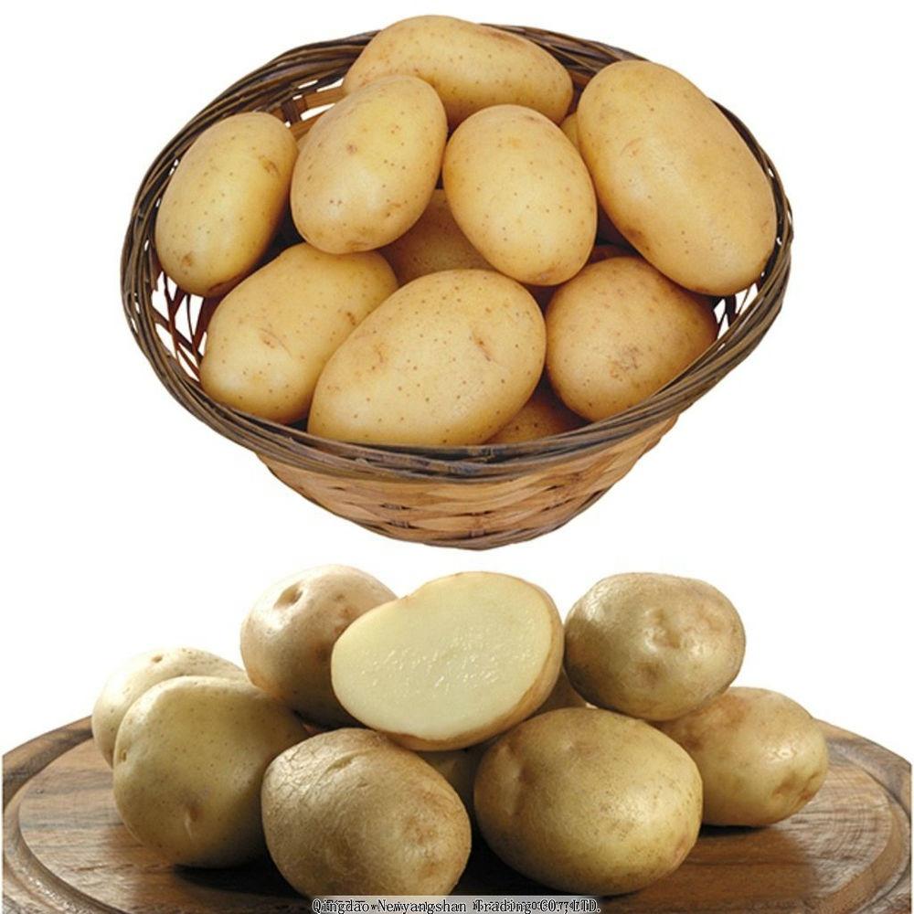 Organic Fresh Potato Importer & Exporter in China