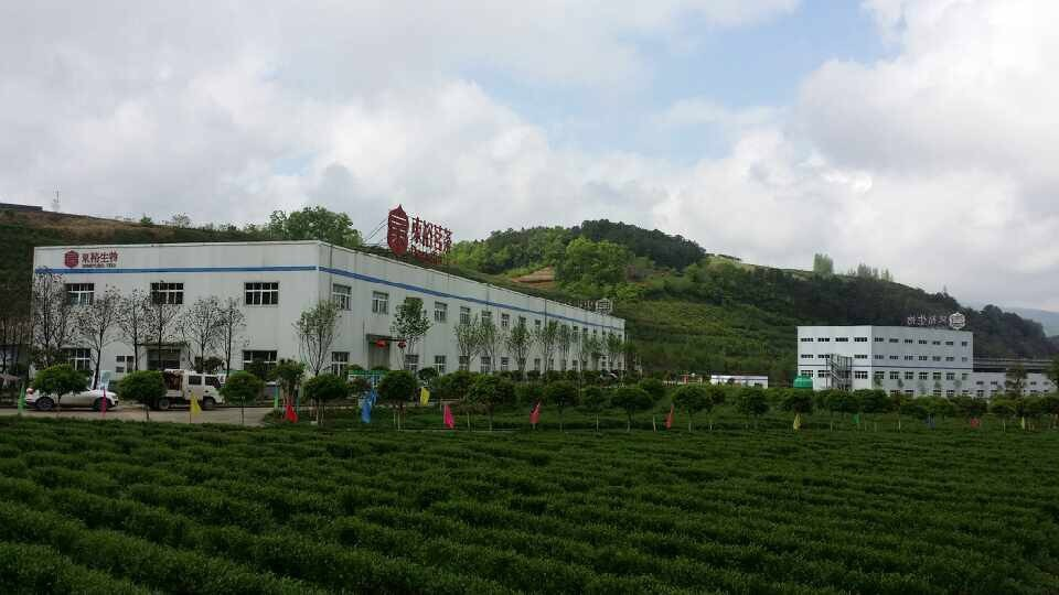 Nature wild tea seed oil best healthy oil in bottles and OEM cold titration