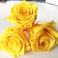 Beauty and the Beast Decorative Flower Rose Eternal Preserved Rose Flower