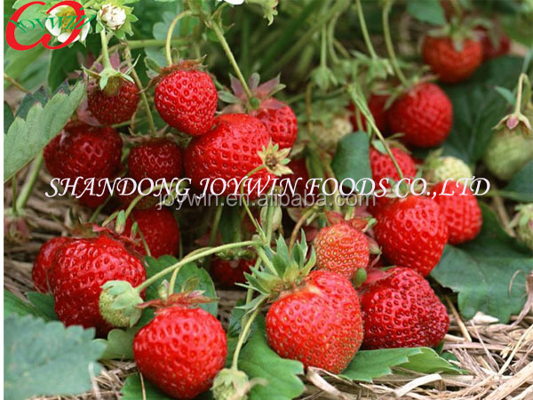 Canned Strawberry,Frozen Strawberry In Light Syrup Manufacturer ...
