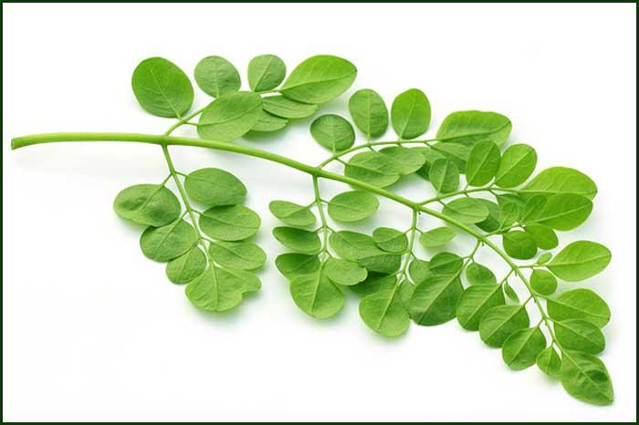 Halal&kosher High Quality Freeze Dried Moringa Leaf Powder/moringa ...