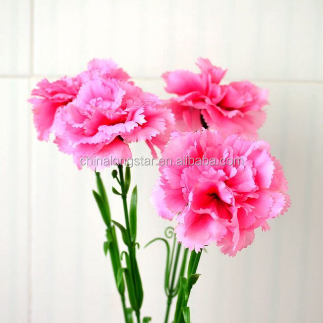 Artificial Carnation Bouquet,Carnation Cut Flowers Price - Buy ...