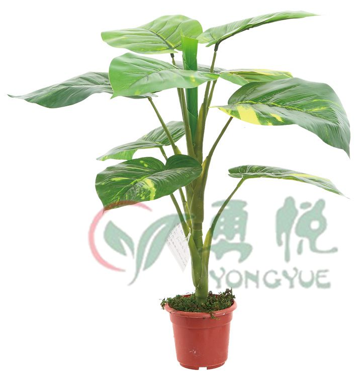 Single Stem Artificial Rubber Leaf Plant For Indoor Decoration0142 YY046