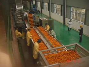 Peach Pulp Juice Fruit Processing Line Peach Apricot