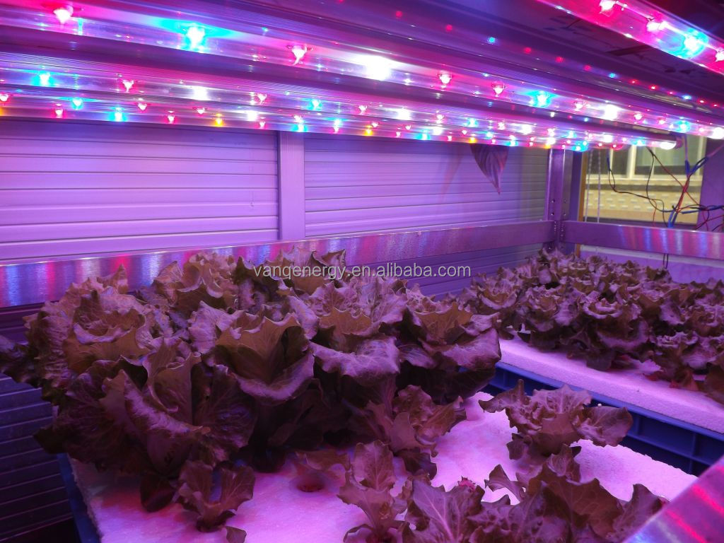 Plant Tissue Culture Labs Light,Led T8 Tube Grow Light 20w,New ...