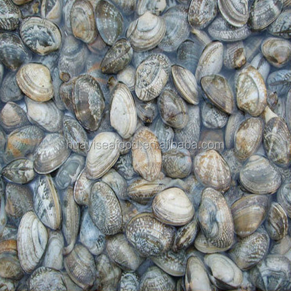 frozen short necked clam(black clam)