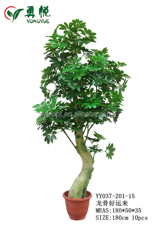 Artificial money tree plant hot sell factory