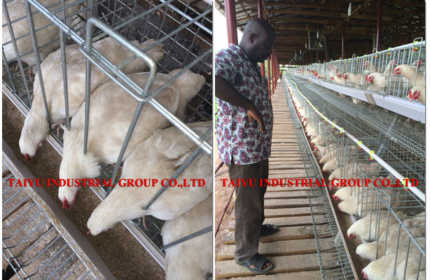 Taiyu Factory Design Kenya Poultry Farm House Chicken Cages Buy