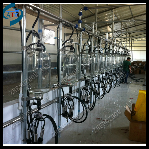 High efficiency herringbone milking parlour cow milking for Parlour equipment