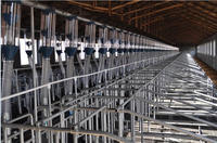 Gestation Stall For Sow/gestation Crate/piggery Equipment With ...
