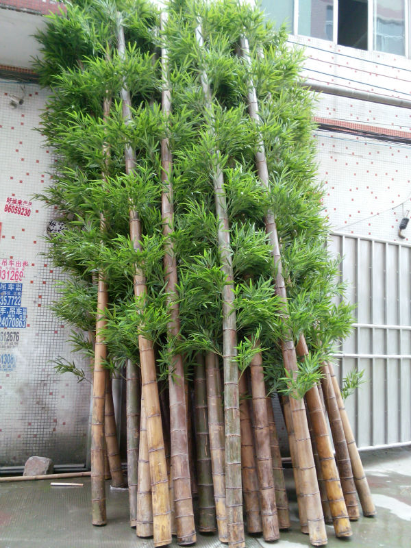 high quality outdoor cheap real trunk lucky bamboo artificial bamboo decotative fake bamboo on. Black Bedroom Furniture Sets. Home Design Ideas
